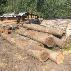На Ківерцівщині з пилорами вилучили понад півсотні незаконно зрубаних дубів