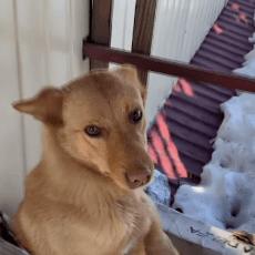 На Рівненщині пес Карлсон живе на даху магазина  (Відео)