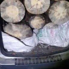 Дільничий поліцейський «спіймав» Опеля з незаконною деревиною