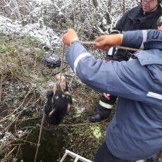 На Волині врятували собаку з 25-метрової криниці