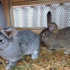 На Волині злодій викрав кролів, а в клітці натомість залишив…