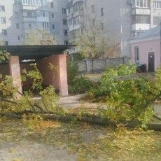 Померла 4-річна дівчинка, на яку впало дерево в дитсадку