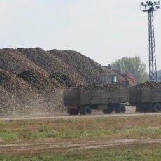 На території луцького цукрового заводу височіють кількаметрові кагати буряків (Фото)