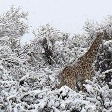 В Африці зафіксували рекордні морози та випав сніг