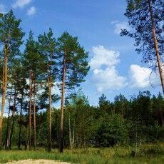 138 гектарів лісових ділянок на Волині повернули у державну власність