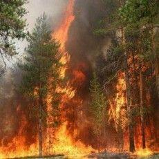 На Рівненщині горить один з найбільших заповідників України (відео)