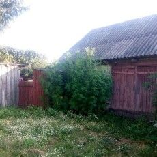 Один турійчанин вирощував коноплі просто на подвір'ї, інший – сіяв мак