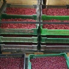 Податківці викрили на Ратнівщині незаконний «ягідно-грибний» бізнес