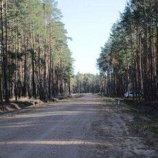 На Волині збудували лісову дорогу, щоб лісовози не зруйнували автошлях до місць захоронення польських вояків армії Пілсудського (Фото)