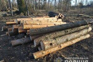 26 зрізаних під Кухітською Волею сосен знайшли на пилорамі аж на хуторі Скоморохи