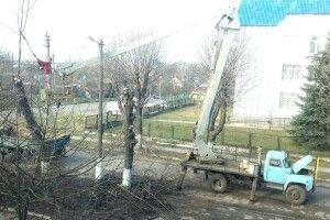 У Турійську розпочали екологічну обрізку дерев