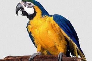 Балакучий папуга допоміг розкрити вбивство
