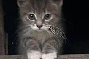 У Луцьку шукає свою Людину котодівчинка в білих шкарпетках (Фото)