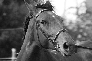 На Рівненщині загинув чоловік, який провалився у боброву нору разом з конем