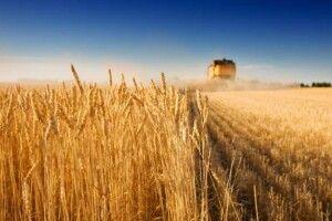 Україна може залишитися без врожаю: народний синоптик прогнозує небувалу посуху