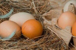 В Україні стрімко скорочується виробництво яєць