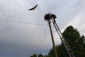 Рятувальники повернули в гніздо лелеченя, що з нього випало (Фото)