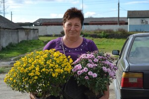 Ратнівчанка Галина Северинюк знає, що хризантеми можна пересаджувати цілий рік
