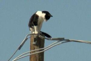 На Рівненщині дитина впала з електроопори