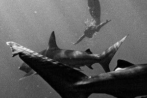 Модель Playboy знялась оголеною з акулами-людожерами (Фото)