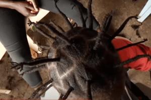 У перукарнях зарослим під час карантину пропонують зачіску «Коронавірус»: вартує якихось 13 гривень