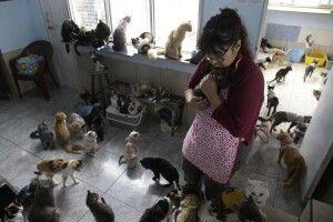 У Конотопі влада вирішує, куди подіти 12 котів та собак