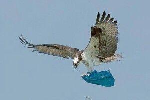Українські орнітологи порадили дзьобатим триматися якнайдалі від пластикової упаковки (фото)