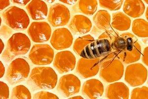 Як визначити, чи натуральний мед