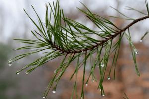 Погода на неділю, 6 грудня: морозу не буде