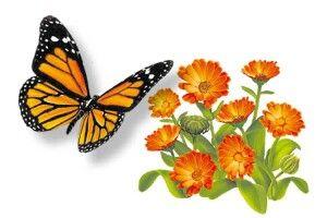 Квіти кажуть метеликам: «Зась!»