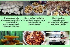 Головний медик країни: «Найкраще відмовитися від споживання дикорослих грибів»
