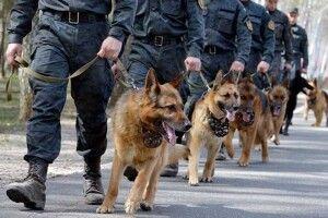 Службові пси вперше стануть учасниками параду доДня Незалежності