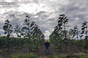 Рівненський фермер вирощує 20-метрові дерева за 5 років