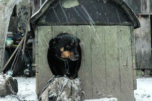 Волинська Хатіко 4 місяці влісі чекала свого бездушного господаря