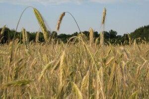 «Закон про ринок землі – для олігархів, а не для українців»