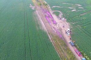 Фахівці з'ясували, що за рожева речовина розлилась біля Рівного (Фото)