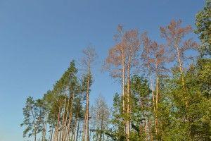 Горохівські лісівники сплатили у місцеві бюджети 2,6 млн грн