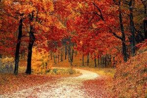 Погода на вівторок, 19 жовтня: за кілька днів на волинян чекає суттєве похолодання