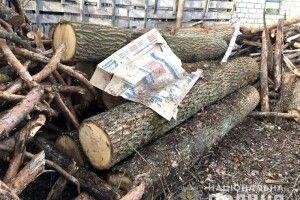У Дюксині поліція знайшла за хлівом дюжину дубових колод (фото)
