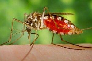 Погода на неділю, 10 листопада: якщо на Параскеви П'ятниці побачимо комарів – зима нам не страшна