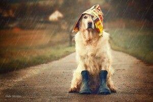 Погода на четвер, 28 травня: невеликий короткочасний дощ, гроза