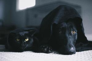 Волинян закликали берегти чорних котиків та песиків від сатаністів