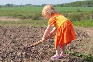 «У дитини астма!»: учнів змушували під час уроків збирати врожай