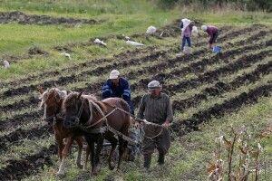 Задля популяризації традиційного українського села знімуть серіал «Фермери»