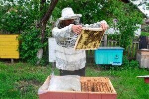 Як на лісових пасіках Волині збирають перший мед  (Фото)