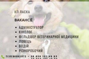 У Луцьку терміново шукають кінологів, ветеринарів та ловців собак