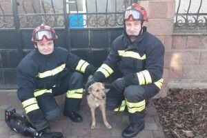 У Рівному рятували рудого пса, який застряг у металевій огорожі (фото)