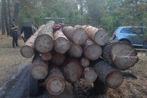 45 тисяч збитків: викрили волинян, які організували незаконну порубку лісу (Фото)