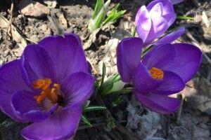 Весняні вітри, дощі і потепління: прогноз погоди на тиждень до 14 березня