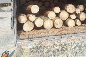 У вантажівці виявили деревину без документів
